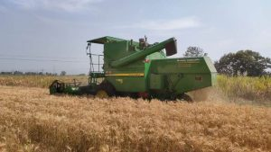 Harvesting of Wheat (4)
