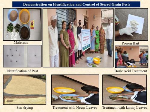Identification of stored grain pests  their management (ENTO)